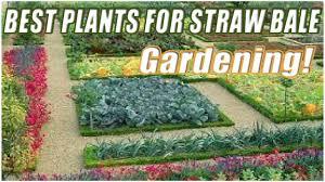 best plants for straw bale gardening