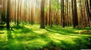 ⭐️ Cảnh Đẹp Mùa Xuân Trên Thế Giới ⭐️ Images?q=tbn:ANd9GcSVAXnwYgcDuJXwlUgQAPxQVbvVlCyJwmcuTC5HJuJx5TEe02wh