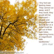 Tree Quotes Beauteous Favorite John Muir Quotes Fools And Trees Postconsumers