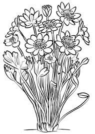Disegno Di Anemone Transsilvanica Da Colorare Disegni Da Colorare