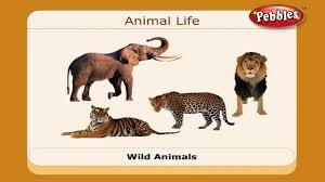 Animals Science Basics For Children Science Projects For Kids
