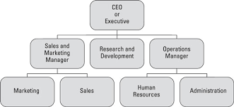 Executive Hierarchy Chart Solidify Your Organization Chart To Improve Time Management