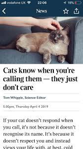 Such Ass Hole : cats