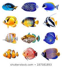 1000 Saltwater Fish Stock Images Photos Vectors