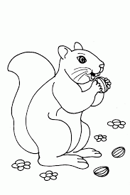 Small Picture Coloring Page Squirrel animal coloring pages 9