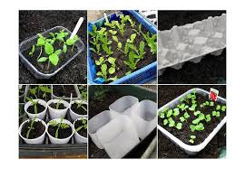 12 seed starting ideas using recycled materials