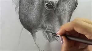 horses drawings in pencil step by step. Perfect Drawings Intended Horses Drawings In Pencil Step By H