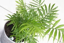 Common Indoor Plants Identification