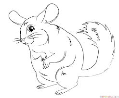Small Picture How to draw a cartoon chinchilla Step by step Drawing tutorials