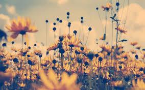 vine sunflower hd wallpaper