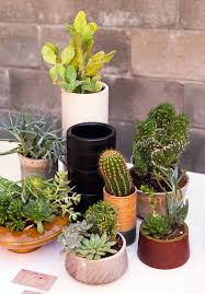 Small Picture Best 20 Small cactus plants ideas on Pinterest Mini cactus