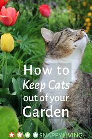 how to keep cats out of the garden. How To Keep Cats Out Of Your Garden Edible Sun Bowl For . The S