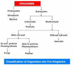 Five Kingdom Classification Chart Home