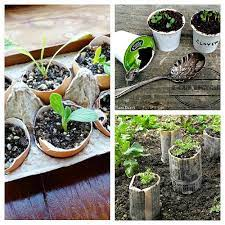 creative seed starting ideas diy seed