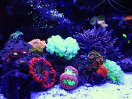 Cool Aquariums 136 Best Reef Tanks And Setups Images On Pinterest