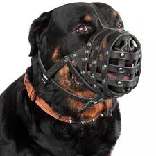 rottweiler dog. rottweiler dog muzzle leather bullmastiff mastino basket secure black