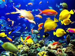 animated moving fish wallpapers. Fish Tank Moving Wallpaper Dowload Animated Background With Wallpapers