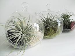Small Hanging Air Plant Terrarium -Your Choice of Moss Colors- 4.5 inches.  $12.00