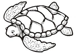 turtle coloring pages. Beautiful Coloring Coloring Pages Of Sea Turtles Page Turtle G51 Intended Turtle Coloring Pages E