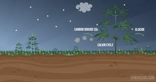 photosynthesis the dark phase
