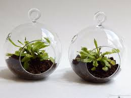 air plant orb terrarium kit 4 5 inches 6 diy garden planter with air plant moss succulent green gifts for friends airplant terrarium glass planter vase