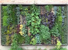 Small Picture Vertical Gardens Design wwwcoolgardenme