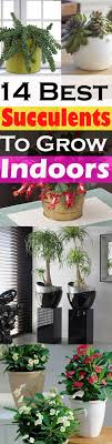 unique looking succulents can make your rooms look better also they are low