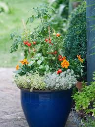 Tips For Hardening Off Tomato And Pepper Seedlings  Tomato Container Garden Plans Tomatoes
