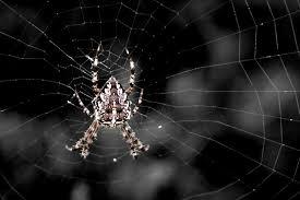 Spiderman - Bild \u0026amp; Foto von oberhauser Markus aus Tiere ... - 10573365