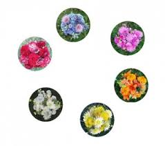 A Floral Color Wheel Munsell Color System Color Matching