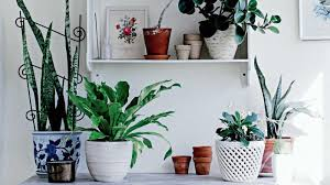 how to choose the ideal indoor plant best office plant no sunlight