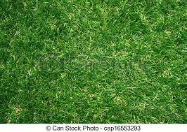 artificial grass field top view texture csp16553293 grass field texture80 field