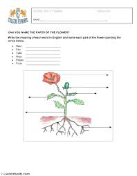 Printable Plant Worksheets Parts Of A Plant Worksheet Image Free For ...