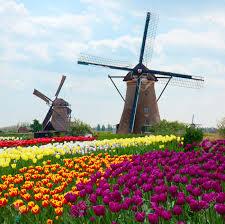 Resultado de imagen de molinos de holanda con tulipan