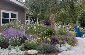 drought resistant garden.  Drought My Front Garden Features A Broad Selection Of Drought Tolerant Deer  Resistant Plants Including Many Those Recommended Here Intended Drought Resistant Garden T
