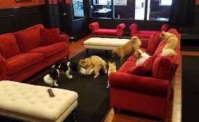 the kids playing in daycare at executive dog lounge in jersey city
