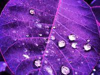 613 Best Rain/Water drops images in 2014 | I love rain, Rain days ...