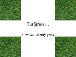 Turfgrass How You Identify Grass Identifying North Carolina Lawn