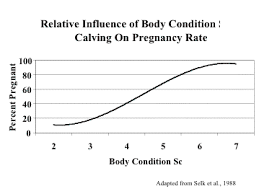 Body Condition Scoring The Cattle Producers Resource