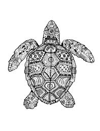 Small Picture 48 best Zentangle Turtles images on Pinterest Drawings Sea