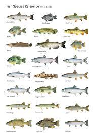 Fish Consumption Survey 3 Nibiish Naagdowen