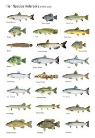 fish types to eat images lobster and