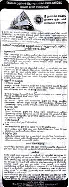 junior personal assistant steno typist english and sinhala application