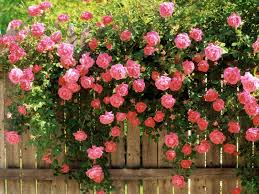 Roses Flowers Wallpapers Wallpaper Rose Flowers Wallpapers
