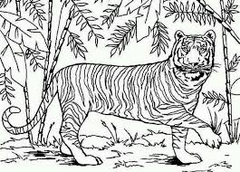 Small Picture Coloring Pages Tigers Miakenasnet