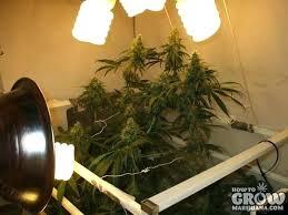 Grow Light Fixtures Led Grow Lights Home Depot – shopforchange.info