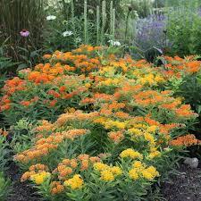 perennials for pollinators