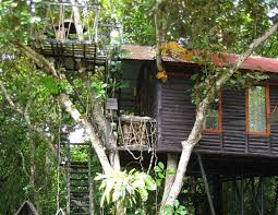 Eat In A Treehouse While Waiters Zipline To Your Table  VIVA Treehouse In Thailand