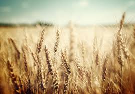 Whole Grains, Refined Grains, and Dietary Fiber | American Heart ...
