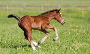 How Much Does A Horse Weigh Horse Weight Height Chart